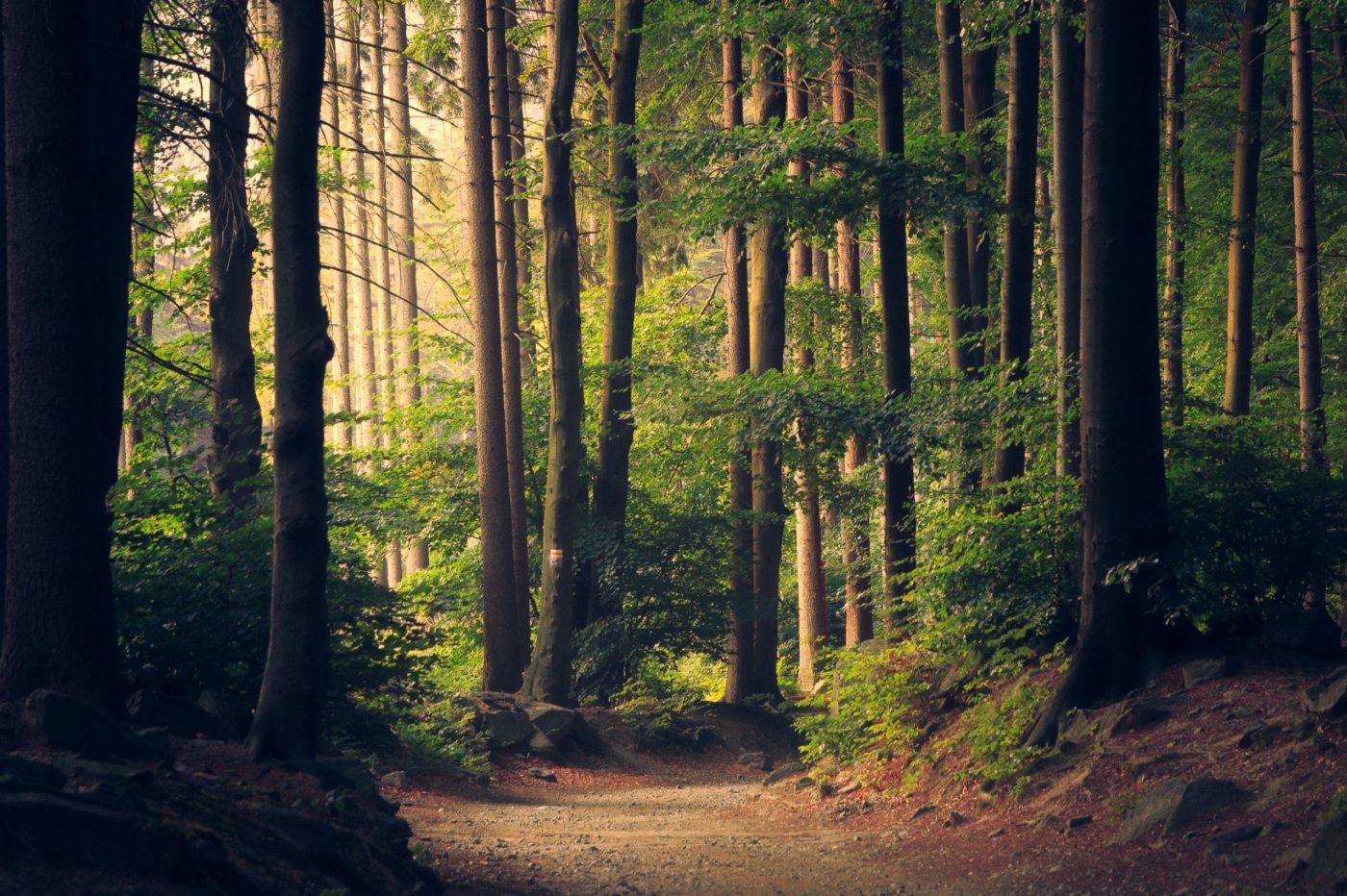 Kraftort Natur: Das Wunder Wald